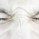 Inkasso des Grauens: Über 1000 Prozent Kosten